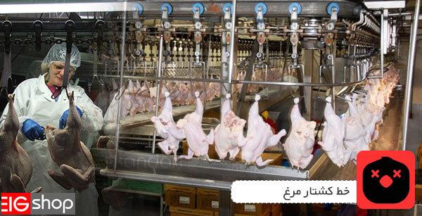 خط کشتار مرغ