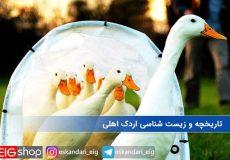 تاریخچه اردک اهلی