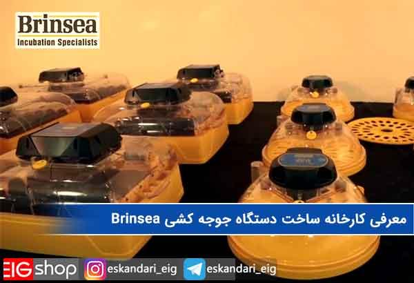 معرفی کارخانه ساخت دستگاه جوجه کشی Brinsea
