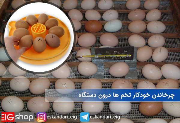 چرخاندن خودکار تخم ها درون دستگاه جوجه کشی