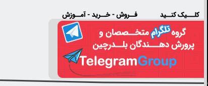 گروه پرورش دهندگان بلدرچین تلگرام Telegram