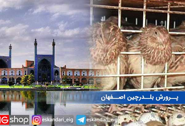 پرورش بلدرچین اصفهان