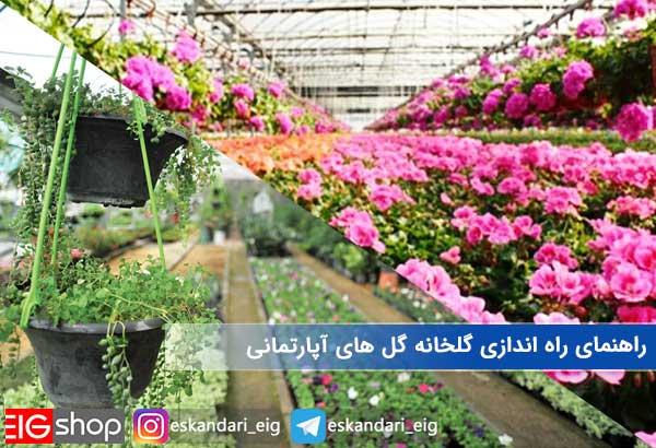 راهنمای راه اندازی گلخانه گل های آپارتمانی