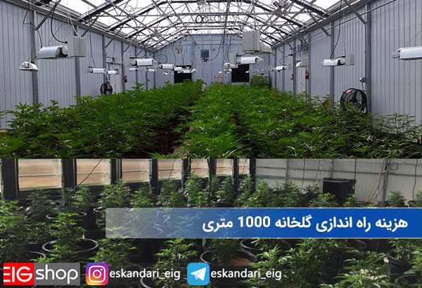 هزینه راه اندازی گلخانه 1000 متری