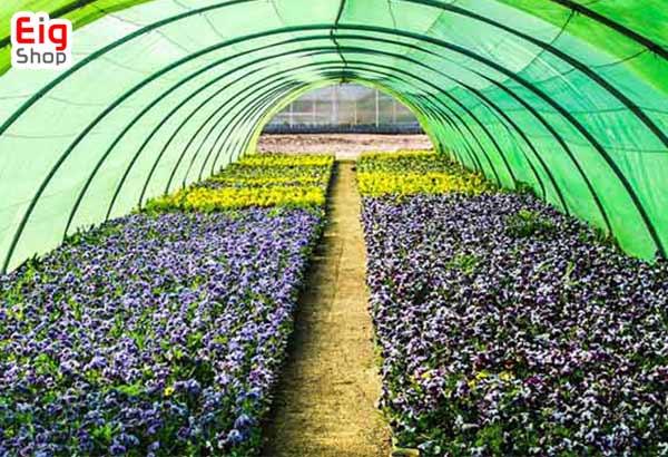کاشت سبزیجات در گلخانه-گروه صنعتی eig