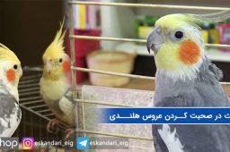 سرعت در آموزش طوطی هلندی