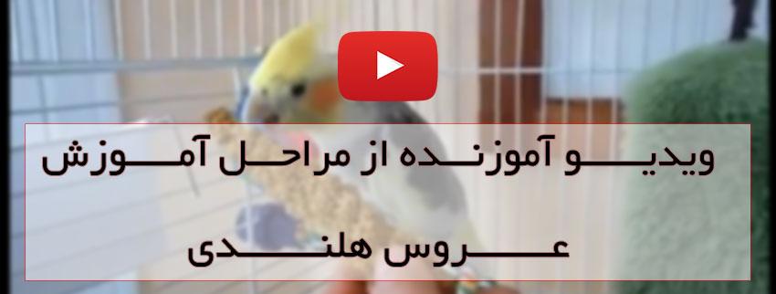 ویدیو آموزش عروس هلندی