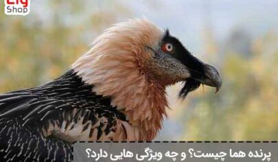 پرنده-هما