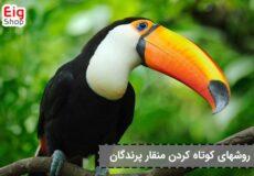 کوتاه کردن منقار پرندگان (1)