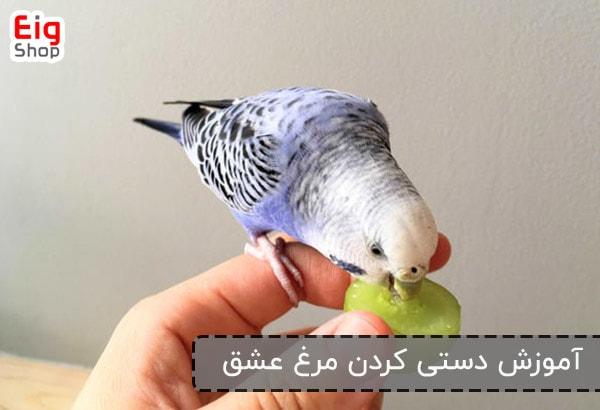 آموزش دستی کردن مرغ عشق