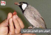 Date nightingale maintenance training (4)