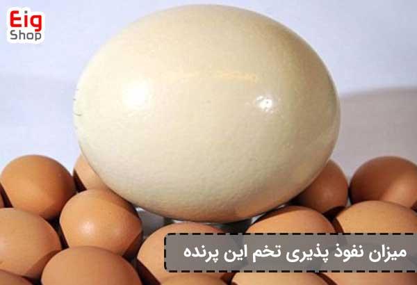 میزان نفوذ پذیری تخم این پرنده