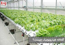 گلخانه-هیدروپونیک-چیست؟