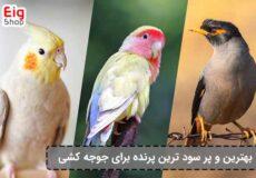 بهترین-پرنده-برای-جوجه-کشی