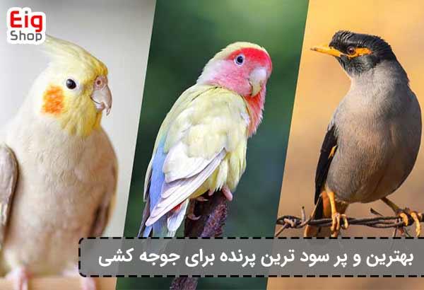 بهترین پرنده برای دستگاه جوجه کشی