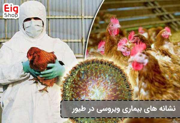 نشانه بیماری ویروسی در طویر
