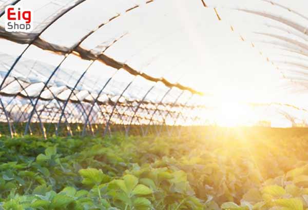 نور خورشید در گلخانه