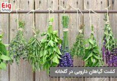 پرورش-گیاهان-دارویی-در-گلخانه