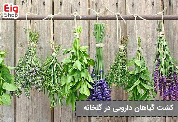 پرورش گیاهان دارویی در گلخانه - فروشگاه اینترنتی eig-shop