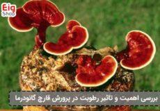 تاثیر-رطوبت-در-پرورش-قارچ-گانودرما