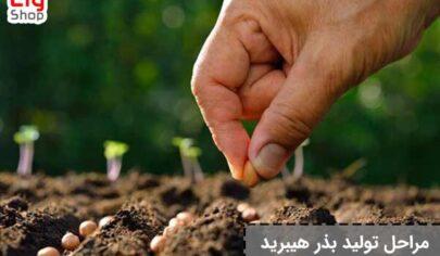 تولید-بذر-هیبرید