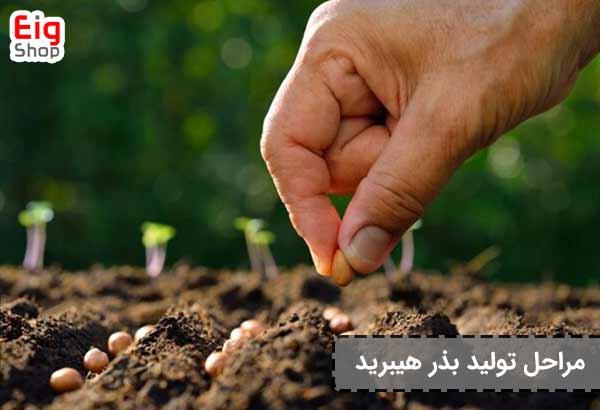 تولید بذر هیبرید - فروشگاه اینترنتی eig-shop