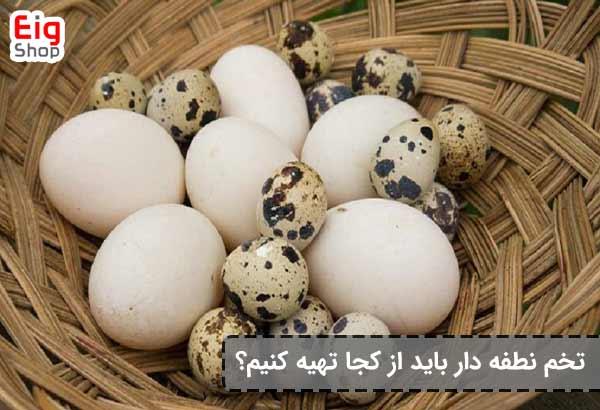 خرید تخم نطفه دار - فروشگاه اینترنتی eig-shop