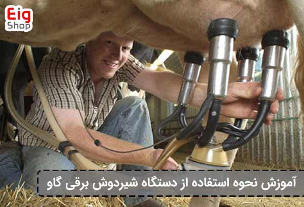 استفاده از شیردوش برقی گاو-گروه صنعتی eig