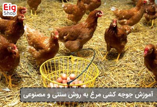 جوجه کشی از مرغ - گروه صنعتی eig-shop