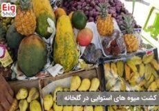 پرورش-میوه-های-گرمسیری-در-گلخانه