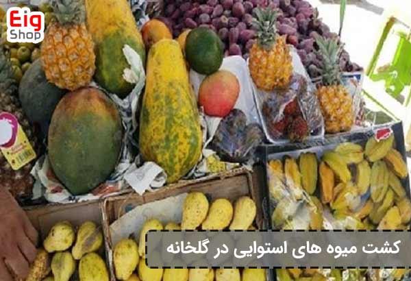 پرورش میوه های گرمسیری در گلخانه فروشگاه اینترنتی eig-shop