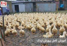 آموزش-کامل-پرورش-اردک