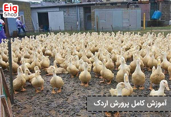 آموزش پرورش اردک - گروه صنعتی eig-shop