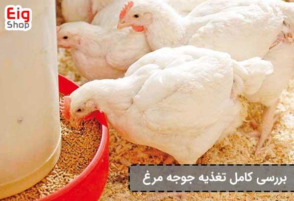 تغذیه جوجه مرغ-گروه صنعتی eig