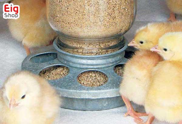 نکات در رژیم غذایی جوجه مرغ ها- فروشگاه اینترنتی eig