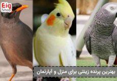 بهترین-پرنده-زینتی-برای-منزل