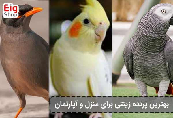 بهترین پرنده زینتی برای منزل-فروشگاه اینترنتی eig-shop