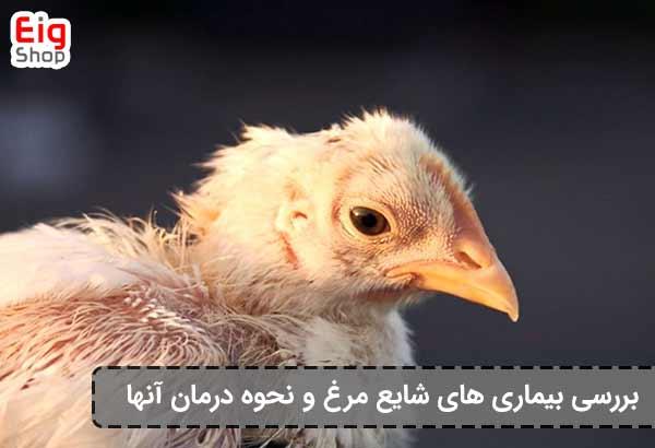بیماری های شایع مرغ-گروه صنعتی EIG
