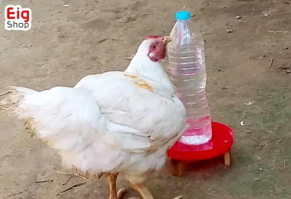 ساخت آبخوری مرغ-قزوشگاه اینترنتی eig-shop