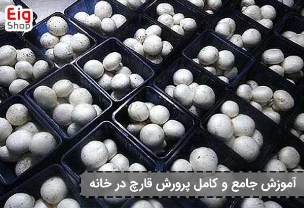 پرورش قارچ در خانه - گروه صنعتی eig