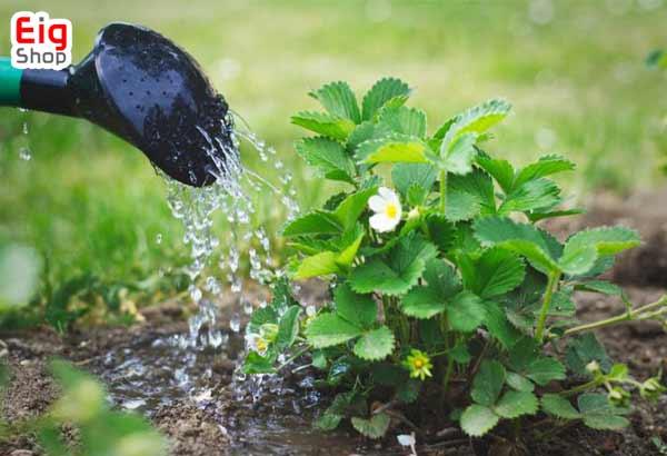 آبیاری گلخانه گیاهان گران قیمت-گروه صنعتی eig