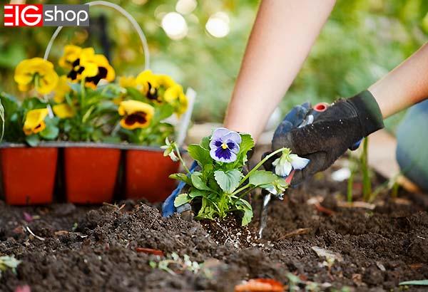 روش های کشت گل های زینتی در گلخانه - گروه صنعتی EIG