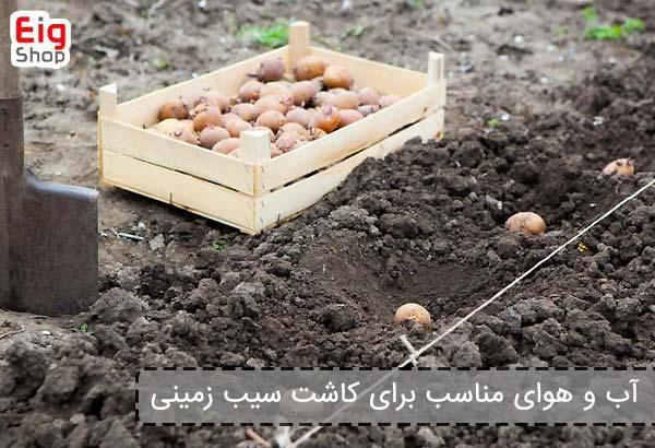 آب و هوای مناسب برای کاشت سیب زمینی - فروشگاه اینترنتی eig shop