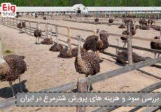بررسی-سود-و-هزینه-های-پرورش-شترمرغ-در-ایران