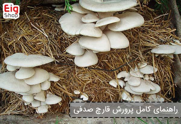 راهنمای کامل پرورش قارچ صدفی - فروشگاه اینترنتی eig shop