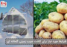 شرایط-مورد-نیاز-برای-کاشت-سیب-زمینی-گلخانه-ای