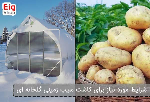 شرایط مورد نیاز برای کاشت سیب زمینی گلخانه ای - فروشگاه اینترنتی eig shop
