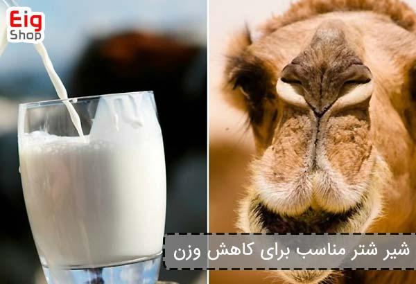 شیر شتر مناسب برای کاهش وزن - فروشگاه اینترنتی eig shop