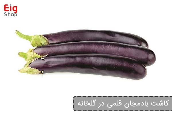 کاشت بادمجان قلمی در گلخانه - فروشگاه اینترنتی eig shop
